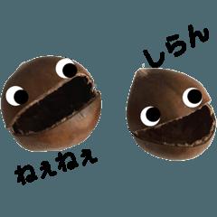 栗のマロンちゃん