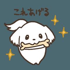 マルチーズ×チワワのミロ【日常】