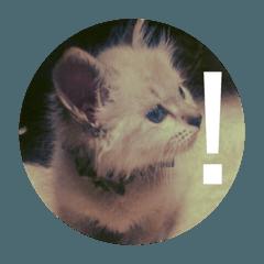 猫(English)