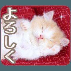 スタンプで癒される 癒し仔猫♪