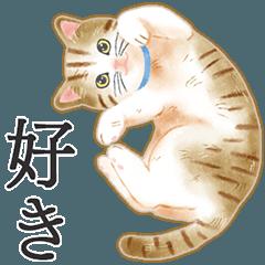 猫(大人の図鑑シール)・可愛い動物系