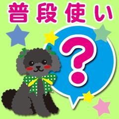普段使い【トイプードル/ブラック】