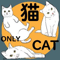 猫 猫 ネコ ねこだらけ!