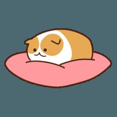 枕のモルモット
