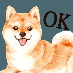 わんこ(大人の図鑑シール)・可愛い犬系