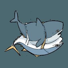 サメとマグロ