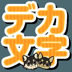 【デカ文字】チワワのCOCOとLOUIS