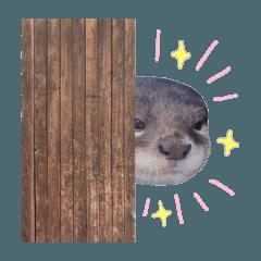 [LINEスタンプ] ひょっこりさん いろんな動物で会話