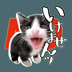 保護猫スタンプ③