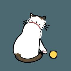 こっちを向かないウチの猫
