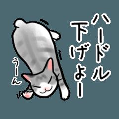ハードルを下げる猫