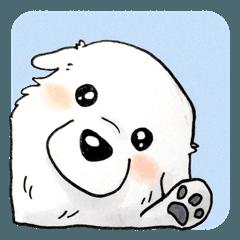 大きな白い犬 ピレネー犬