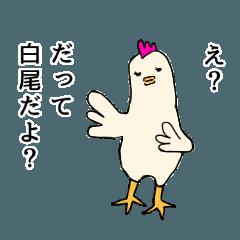 白尾はチキン【日常】