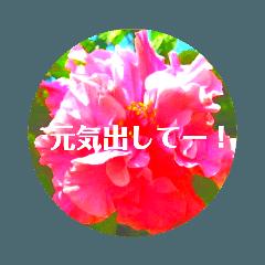 EUROPE flower2♡♡[日本語]