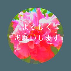EUROPE flower3♡[日本語敬語]