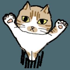 どろぼうひげ猫