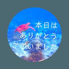 sea world3♡[日本語敬語]