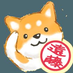 遠藤さん用 柴犬・チワワ・トイプードル