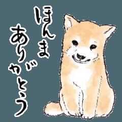 愛らしく真面目な柴犬さん 関西弁日常会話