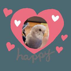 lovely bird sichan インコのしーちゃん