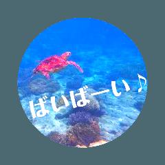 sea world2♡[日本語]
