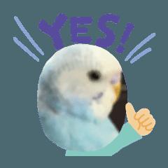 癒しの青い鳥