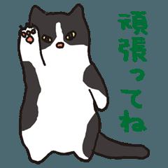 ハチワレ猫の使いやすいかわいいスタンプ
