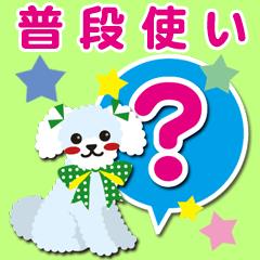 普段使い【トイプードル/ホワイト】