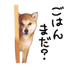 柴犬と4匹の先住猫 実写版 スタンプ 訂正版