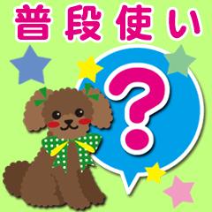 普段使い【トイプードル/アプリコット】