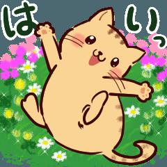 花ねこにゃん♡敬 語