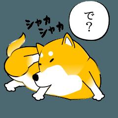 激しく尻尾をふる柴犬 2