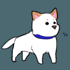 可愛い紀州犬