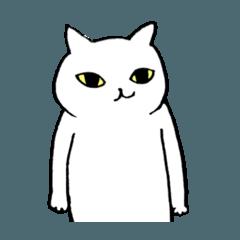 猫たち。白猫の日常