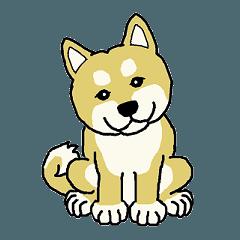 柴犬のいる生活(英語版)