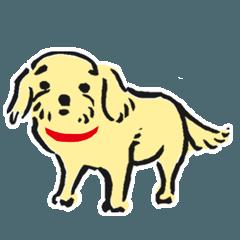 キャバリアとマルチーズのミックス犬