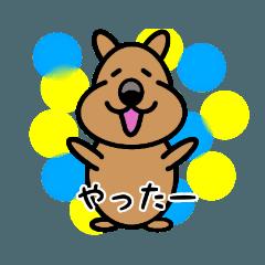 世界一幸せ☆クォッカのクー太