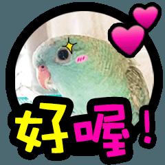 かわいいグリーンクロスカントリー鳥